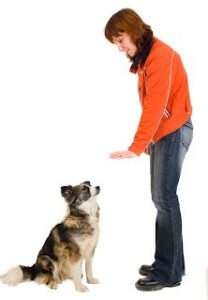 dog-obedience